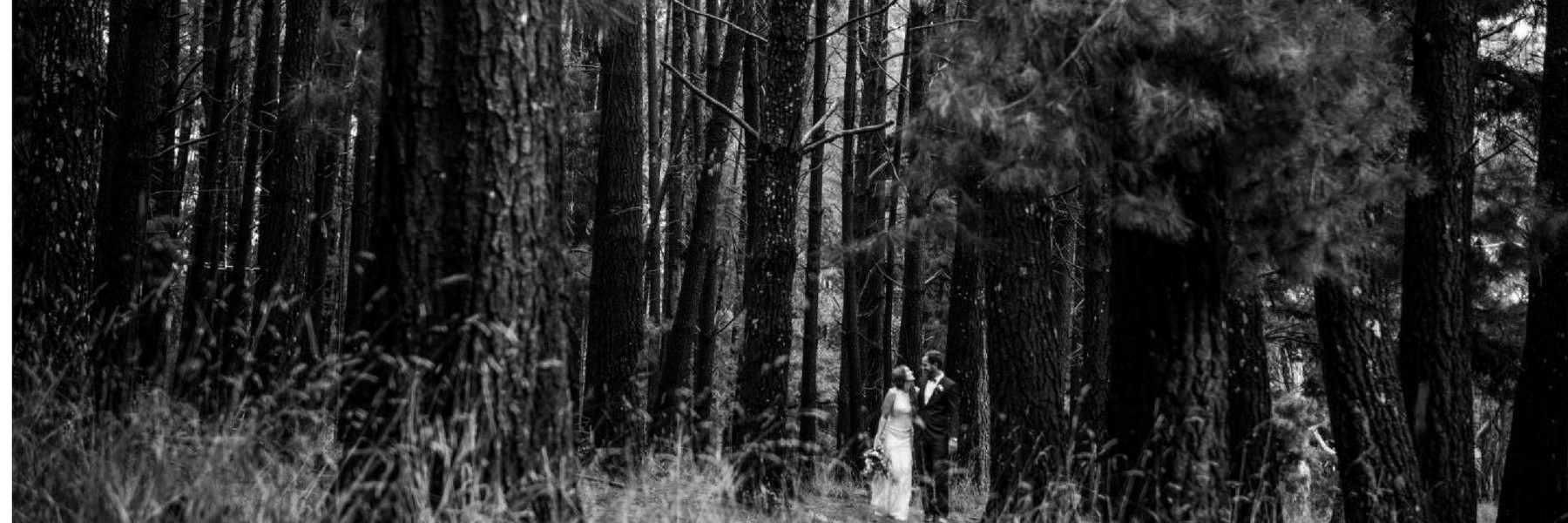 Woodhouse Weddings Pine Forrest